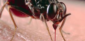 O ubodima insekata i njihovom liječenju