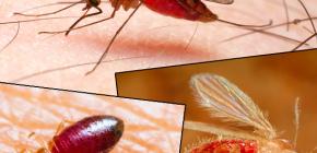 Ujedi raznih vrsta insekata i njihovih fotografija