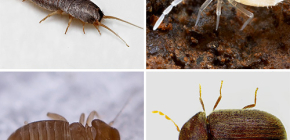 Koje male insekte možete pronaći u stanu