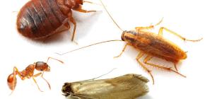 Kako se boriti protiv kućnih insekata u stanu