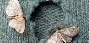 Što odjeća nosi moljci?