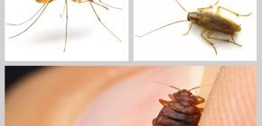 Insekticidni repelenti kukaca u domu: pregled lijekova