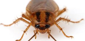 Fotografije raznih žohara