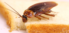 Kako se mogu riješiti žohara u stanu