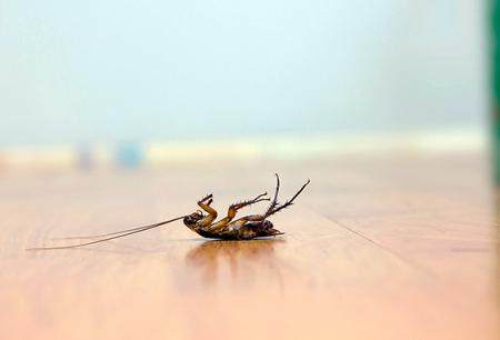 Odabir učinkovitog otrova za žohare