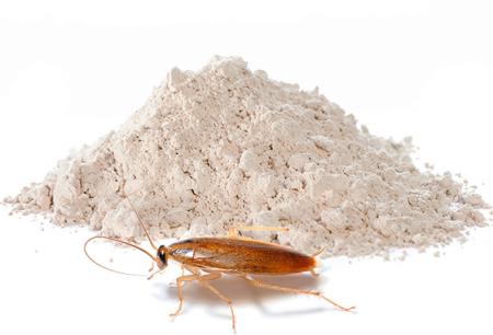 Prašak od žohara: pregled učinkovitih sredstava