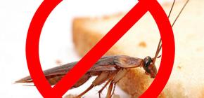 Uništavanje insekata: korisni savjeti i važne nijanse