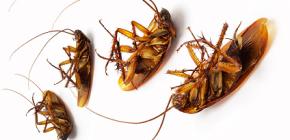 Zemljišta protiv žohara